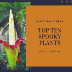 Top 10 Scary Plants
