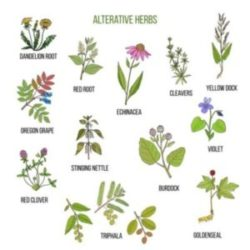 Alterative Herbs
