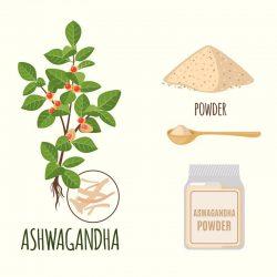 10 Key Health Benefits of the Ashwagandha Herb