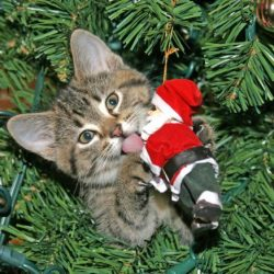 Easy DIY Way to Keep the Cat Out of the Christmas Tree