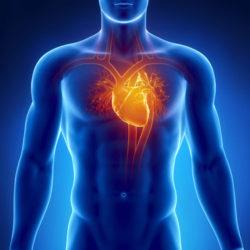 Cardiac Health / High Blood Pressure