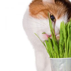3 Herbs for Cats