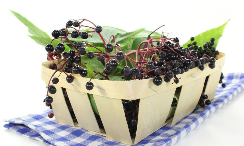 Elderberry Cobbler Recipe