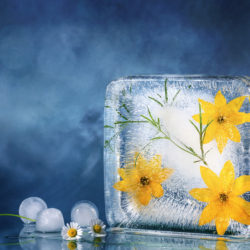Making Flower Ice Cubes