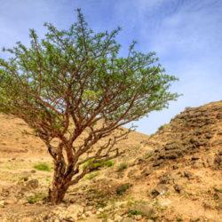 Threatened & Endangered Herbs & Essential Oil Plants