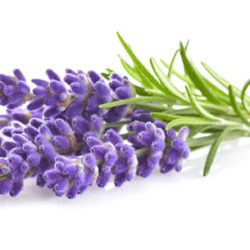 Easy Lavender Tea Recipe