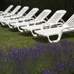 Is Lavender Really Calming?