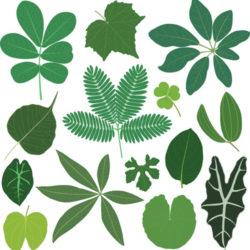 Basic Plant Identification