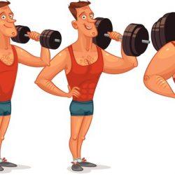 Muscle Development