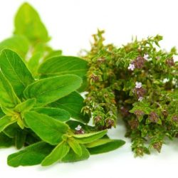 Differences Between Oregano, Sweet Marjoram & Thyme Essential Oils