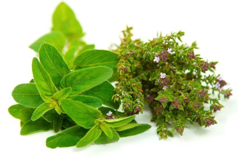 Earth to Kathy – Herbs and Essential Oils, Based on Research