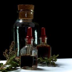 EO vs the Same Plant's Herb