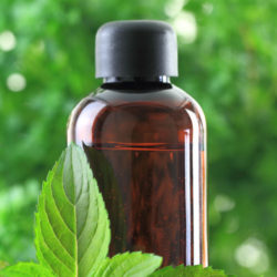 Which Brand of Peppermint EO Should I Buy?