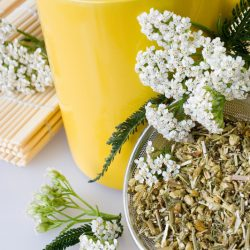 There are Many Benefits of Yarrow